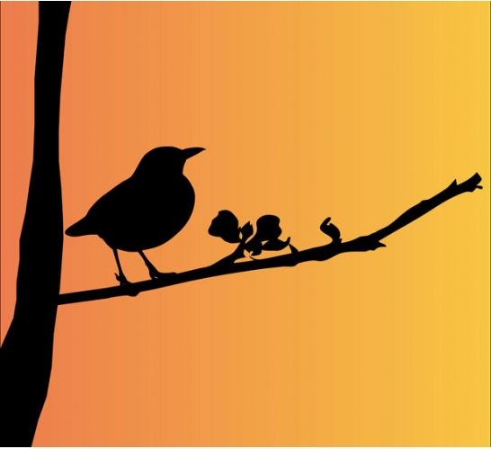 Story Of The Blackbird